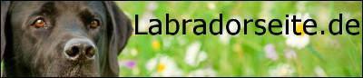 Banner Labradorseite de 400x86px